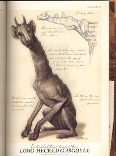 Arthur Spiderwick That's a giraffe! Magic Creatures, Mythical Creatures, Fantasy Magic, Fantasy Art, Spiderwick, Legends And Myths, Arte Horror, Creature Concept, Mythological Creatures