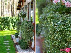 19 roślin, które będą rosły w zacienionych miejscach! - Twoje DIY Bonsai, Diy And Crafts, Pergola, Sweet Home, Yard, Outdoor Structures, Inspiration, Flowers, Plants