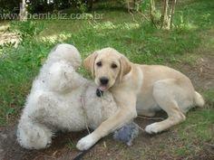 A mistura mágica que ensina o cão a fazer xixi e cocô no lugar certo