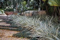 grama-preta (baixa e de folhas escuras) e a barba-de-serpente (mais clara) Landscape, Plants, Gardens, Ideas, Design, Country Garden Decorations, Indoor Vertical Gardens, Tropical Garden, Flowers