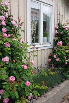 The charming pink rose 'Constance Spry' trained up trellises frames a window of this home. Back Gardens, Small Gardens, Outdoor Gardens, Garden Cottage, Rose Cottage, Pink Garden, Dream Garden, Garden Roses, Constance Spry