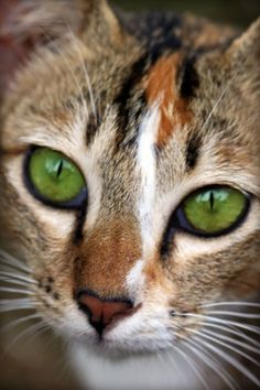 Green eyes......I have often wondered if these are the kind that are envious?  and.....if so, what on earth could this special little kitty be envious of?