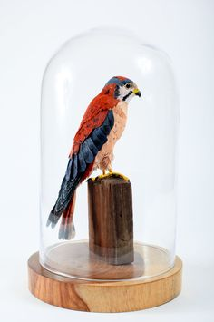 Aimee Baldwin. American Kestrel --Falco sparverius. 2008. Crepe paper, glass eyes, wood base, dome. via Etsy.