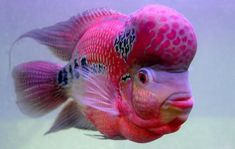 cool Piscine beauty - The Hindu by http://www.dezdemon-exoticfish.space/exotic-fish/piscine-beauty-the-hindu/