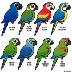 Birdorable macaws