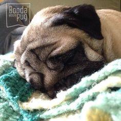 Sleepy head ❤️ #Stella #pugs