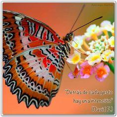 """""""Detrás de cada gesto hay una intención"""". (David F.) http://alejandrodavidfo.blogspot.com"""