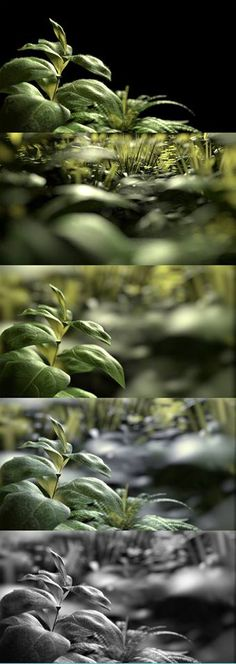 render cycle with blender.just trying and playing with translucent shader. Cgi, Plant Leaves, Plants, Flora, Plant, Planting