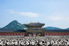 """1600 Pandas "" Makes Its Debut in South Korea"