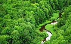 Foresta di alberi con fiume dall'alto