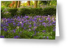 Bluebell Woodland 2 Greeting Card by Joan-Violet Stretch