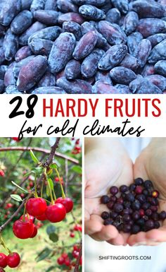 28 Hardy Fruits You Can Grow in Zone 2 and 3 If you want to fill your backyard landscape with fruit trees, but think you can't because of your cold climate, you're in luck! Here's 28 cold tolerant fruit trees perfect for growing in zone or 5 in Canada. Fruit Tree Garden, Planting Fruit Trees, Dwarf Fruit Trees, Fruit Bushes, Growing Fruit Trees, Veg Garden, Fruit Plants, Garden Trees, Edible Garden