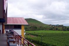 5 of the Best Vineyards in India: Sula Vineyards