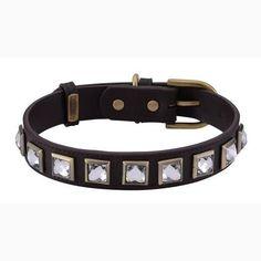 Monte Carlo Brown Dog Collar – Bark Label