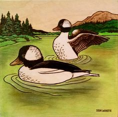 Bufflehead ducks in pond on 10 x 10 inch plywood. (Colored with Prismacolor & oil pencils.) (SOLD)