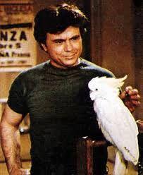 Baretta ve papağanı