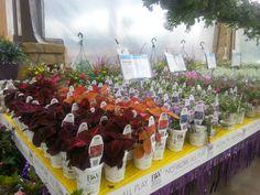 Proven Winners at Calloway's Nursery in Southlake Proven Winners, Nursery, Drinks, Bottle, Garden, Flowers, Plants, Drinking, Beverages