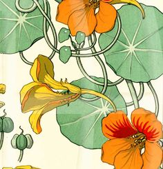 Vintage Botanical Poster Art  Reproduction - Nasturtium by Eugene Grasset. $17.00, via Etsy.