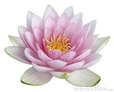 Lotus Flower - Download From Over 35 Million High Quality Stock Photos, Images, Vectors. Sign up for FREE today. Image: 8341397