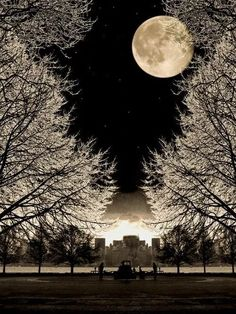 Moon This is so gorgeous! Nature wow she's so lovely and breathtaking! Especially, Beautiful Moon Beautiful World, Beautiful Places, Trees Beautiful, Romantic Places, House Beautiful, Shoot The Moon, Jolie Photo, Night Skies, Pretty Pictures