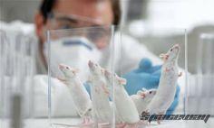 Стволовые клетки восстановят череп