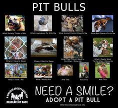 Pit bulls