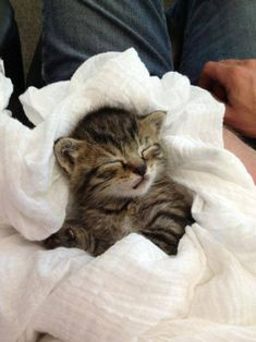 Very interesting post: TOP 30 Cats and Kittens Pics.сom lot of interesting things on Funny Cat. Kittens Cutest Baby, Kittens And Puppies, Cats And Kittens, Cute Cats, Funny Cats, Adorable Kittens, Cute Baby Animals, Funny Animals, Animals Images