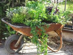 upcycled wheelbarrow herb garden