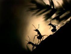 Tammy Bergström - World of Ants