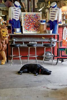Sally takes a snooze at the Black Dog Salvage.