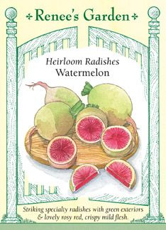 Radish, Watermelon: keep moisture even/consistent, sow 2-3 inches apart, plant every 7 days for a continuous supply