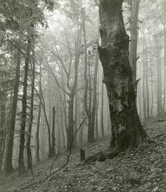 Josef Sudek (Czech photographer, 1876-1976)