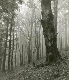Josef Sudek (Czech photographer, 1876-1976)