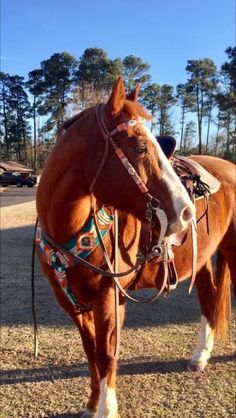 Cute Horses, Pretty Horses, Horse Love, Beautiful Horses, Barrel Racing Horses, Barrel Horse, Horse Photos, Horse Pictures, Foto Cowgirl
