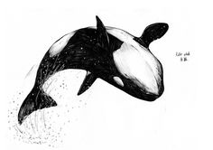 Sketch_whale_04