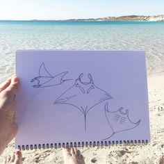 Scribbling manta rays at the beach  . . . . #iwantamantarayemoji #oratleastastingray #mantaray #ningalooreef #thebay #turquoisewater #crystalwater #coralbay #ocean #marinelife #bythesea #oceanartist #ray #westernaustralia #perthartist #finelinerartist #finelinerdrawing #finelinerart #handdrawn #drawing #sketchibg #scribbles #marineanimal #fish #rays #manta #mantalove