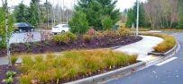 Roadside plantings beside a pedestrian crosswalk Landscape Elements, Green Landscape, Landscape Architecture, Sustainable Development, Pedestrian, Pacific Northwest, Sustainability, Plants, Projects