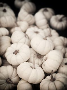 I want little white pumpkins!!!!!!!!!!