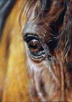 *Beautiful oil on canvas By Svetlana Naumovich Horse Photos, Horse Pictures, Horse Drawings, Animal Drawings, Horse Canvas Painting, Eye Painting, Horse Anatomy, Horse Artwork, Painted Pony