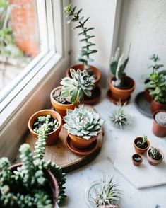 Visiting Marion Rekersdrees - Plants are friends - Cactus Cacti And Succulents, Planting Succulents, Potted Plants, Indoor Plants, Planting Flowers, Indoor Cactus, Flowering Plants, Shade Plants, Hanging Plants
