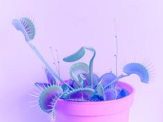 Laminated Venus fly trap on photo paper magnet $3.00