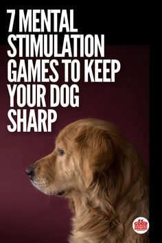 Dog Obedience Training Mental Stimulation Games for Dogs. Dog obedience training comes easier if your dog is mentally active. Check out these fun brain games for dogs. Brain Games For Dogs, Dog Games, Games For Puppies, Tiny Puppies, Dog Minding, Education Canine, Dog Training Tips, Brain Training, Training Classes
