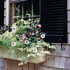 Pretty & sweetly scented windowbox plants for sun: Begonia 'Bada Boom Pink', Verbena 'Tapien Plum Frost', Ivy 'Eva', scented geranium 'Lady Plymouth' and thyme 'Argenteus'.