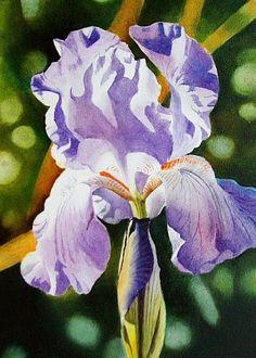 Contemporary Realism - Lavender Iris - oil