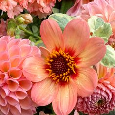 HOW TO DEADHEAD DAHLIAS FOR BLOOMS ALL SEASON LONG   The Impatient Gardener Love Garden, Shade Garden, Garden Ideas, Large Flowers, Yellow Flowers, Pruning Azaleas, Growing Dahlias, Yellow Bouquets, Purple Plants