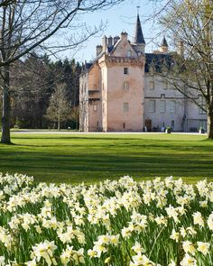 Here is our pick of the best daffodil walks in the British countryside to enjoy this spring. Beautiful Castles, Beautiful Buildings, Beautiful Places, Scotland Castles, Scottish Castles, Brodie Castle, Places Around The World, Around The Worlds, British Countryside