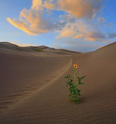 desert flowers | The Evidence for Life | Glory to God for All Things