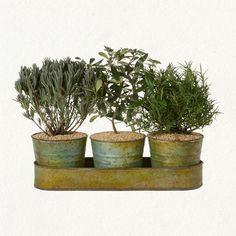 mediterranean herb trio in metal pots and tray