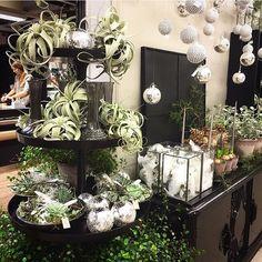 Et lite stemningsbildet fra butikken... Nå begynner det å bli litt jul hos oss også... å som vi gleder oss.... ---------------------------------------- Foto: @floria_fiori ---------------------------------------- #Lillesandblomster #blomsterbutikk #blomster #flowers #flowershop #flowermagic #interflora #interfloranorge #faghandel #inspirasjon #ladeginspirere #inspiration #interiør #vakrehjemoginteriør #interiørmagasinet #blomsterinspirasjon #fioribilden #flowerstyling #floral_design #...