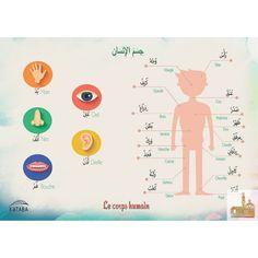 Speech Language Pathology, Speech And Language, Learn Arabic Alphabet, Arabic Lessons, Arabic Language, Learning Arabic, Kids Education, Health And Safety, Vocabulary